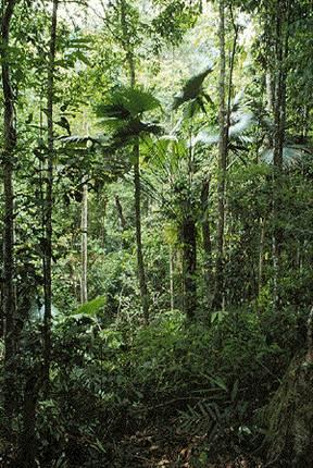 Rừng nguyên sinh – Ảnh: nguồn pumat.vn