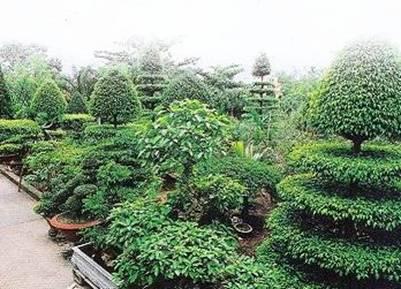 Làng vườn Bách Thuận trù phú – Ảnh: dulichvn.org.vn