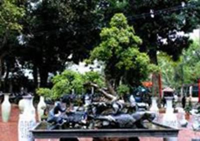Cây thế, bonsai – Ảnh: nguồn dulichvtv.com