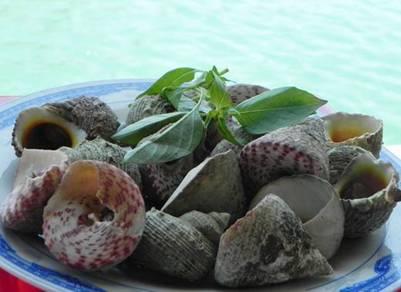Ốc Vú nàng tại Côn Đảo – Ánh: nguồn Condaopark.com.vn