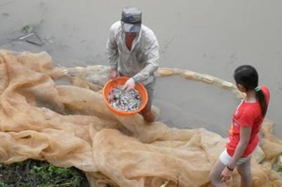 Tình trạng ô nhiễm cùng nguồn lợi thủy sản cạn kiệt đang là vấn nạn ở khu vực làng bè cá La Ngà – Ảnh: T.D. - B.K. (cand.cm.vn – 30.11.2011)