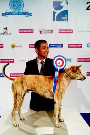 Chó Phú Quốc nhận giải BOB