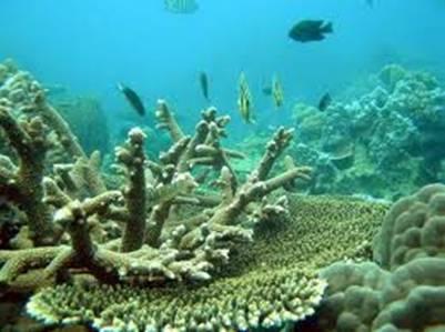 Câu cá lặn ngắm san hô