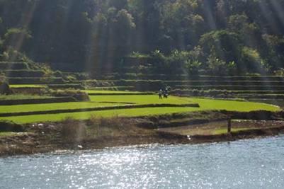 Ruộng cạnh hồ