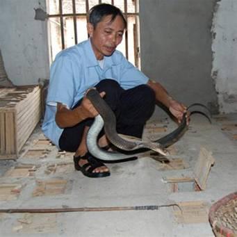 Bên trại rắn sinh sản