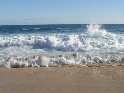 Những chùm hoa sóng