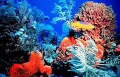 Sặc sỡ sắc màu san hô