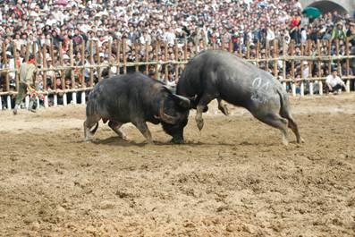 Khóa sừng và nhấc bỗng đối thủ