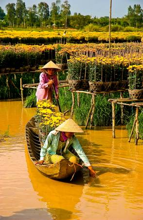 Làng hoa mùa nước nổi
