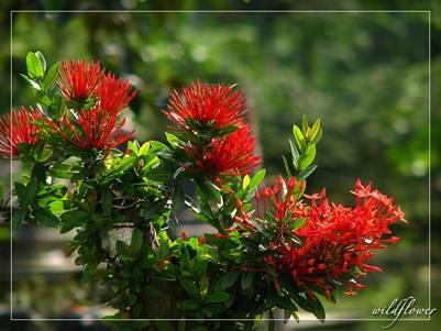 Trang bonsai