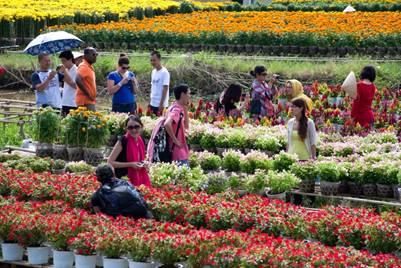 Du khách tham quan làng hoa