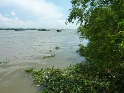 Dòng nước sông Tiền