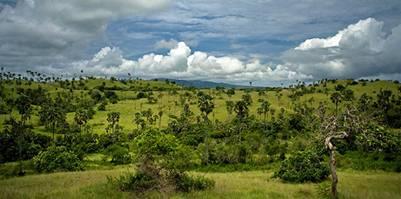 Thảm thực vật rừng phong phú