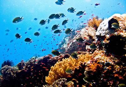Đa dạng sinh học biển VQG Komodo