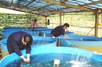 Nuôi cá Tầm giống ở Kon Plông