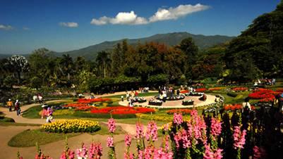 Vườn hoa Doi Tung