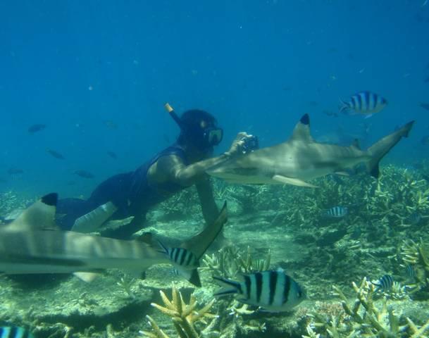 Bơi lặn cùng cá mập
