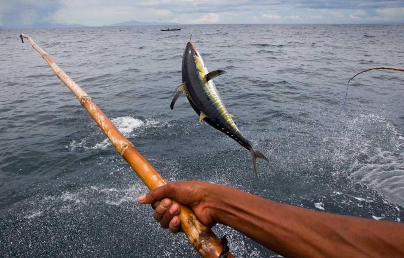 Câu cá ngừ đại dương