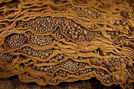 Những hạt ngọc đá