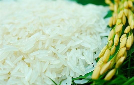 Gạo ST24 đặc sản Sóc Trăng